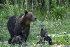 Medve-család