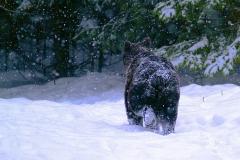 The-bears-way