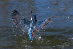 Sikertelen-halászat