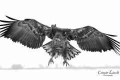 Braking-wings-black-and-white