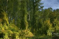 Ősz-a-Tiszán-Tűkörkép
