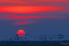 Sunset-in-Lowland